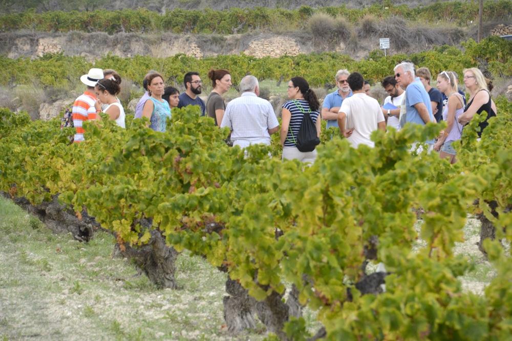 Éxito de la Ruta Turista en Benitatxell para conocer la cultura del moscatel