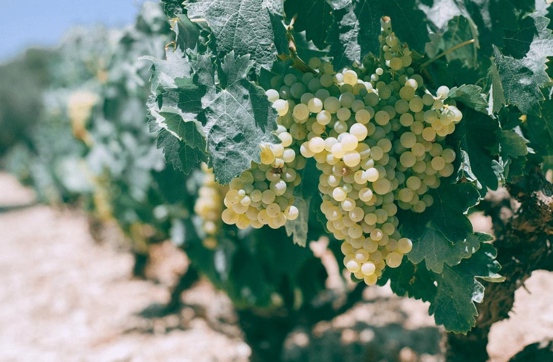 Œnotourisme sur la Costa Blanca : arrêts obligatoires pour les amateurs de vin